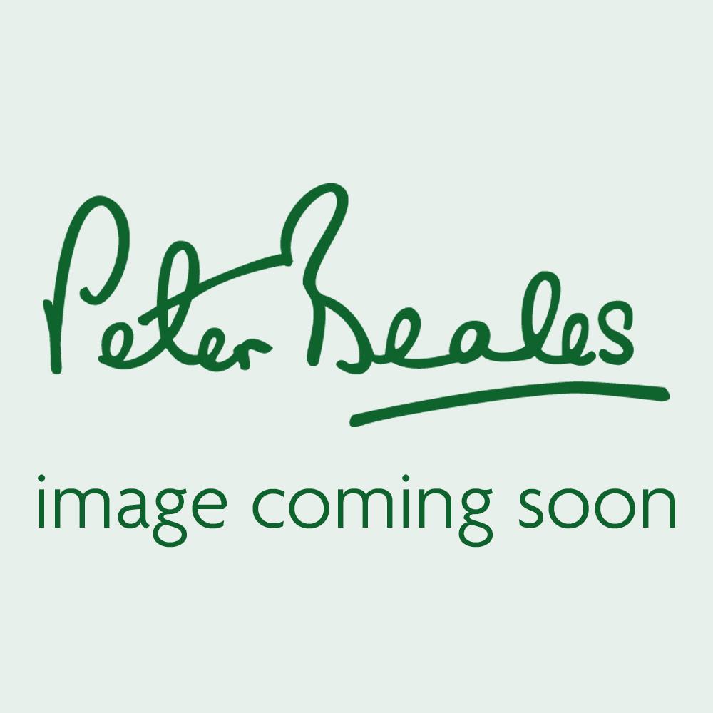 Paeonia lactiflora 'Madame Calot' (Peony)