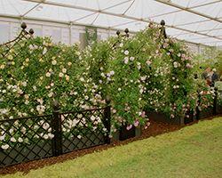 RHS Chelsea Flower Show 2002