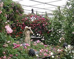 RHS Chelsea Flower Show 2007