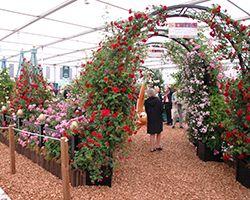 RHS Chelsea Flower Show 2011