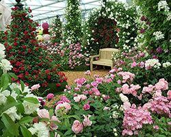 RHS Chelsea Flower Show 2017 Press Day
