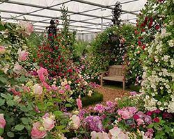 RHS Chelsea Flower Show 2019 Press Day
