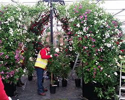 RHS Chelsea Flower Show 2015 Build up
