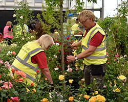RHS Chelsea Flower Show 2016 Build up