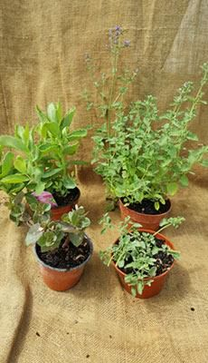 Plants cut back and re-potted