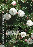 Online catalogue - climbing roses