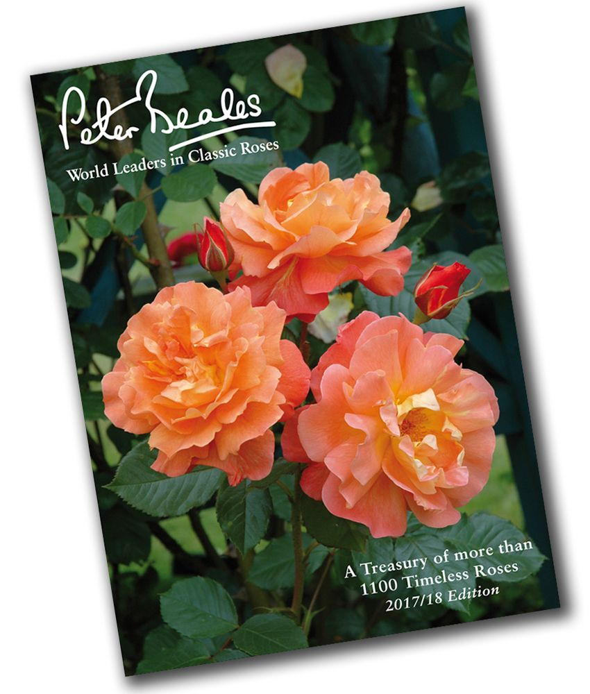 peter beales rose catalogue