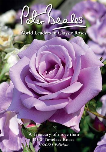Peter Beales Rose Catalogue