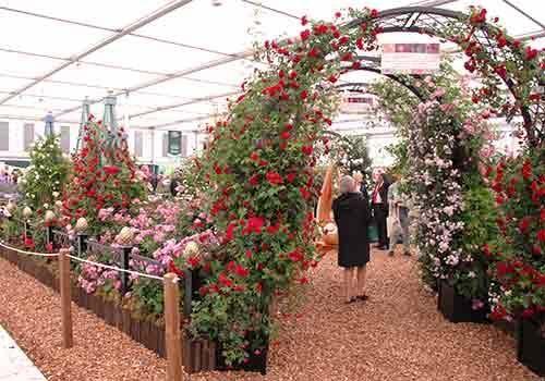 RHS Chelsea Flower Show 2011 Peter Beales Roses