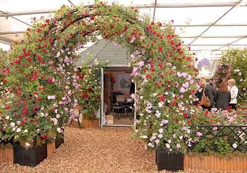 RHS Chelsea Flower Show 2009 Peter Beales Roses