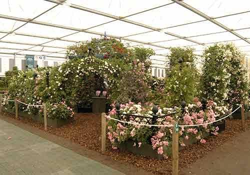RHS Chelsea Flower Show 2004 Peter Beales Roses