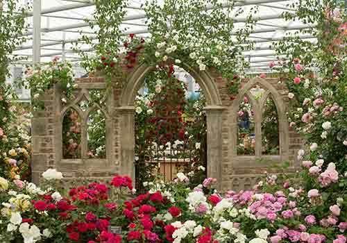 RHS Chelsea Flower Show 2014 Peter Beales Roses