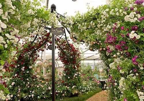 RHS Chelsea Flower Show 2015 Peter Beales Roses