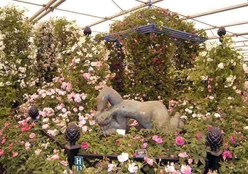 RHS Chelsea Flower Show 2003 Peter Beales Roses