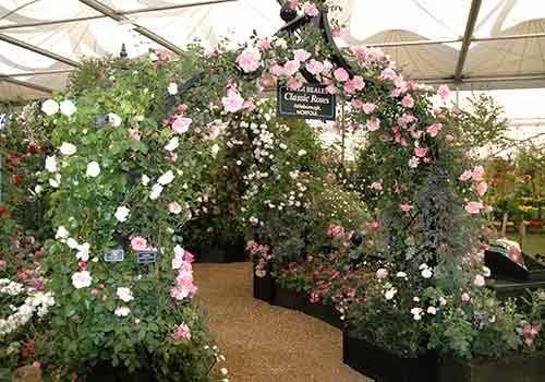 RHS Chelsea Flower Show 2005 Peter Beales Roses