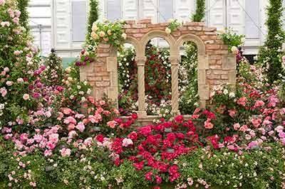 RHS Chelsea Flower Show 2017 Peter Beales Roses