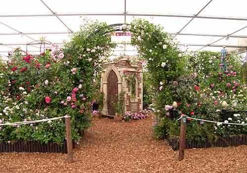 RHS Chelsea Flower Show 2012 Peter Beales Roses