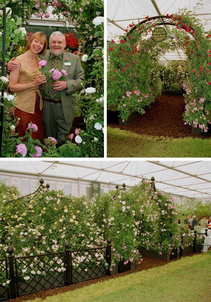 Chelsea Flower Show 2002 launching St Ethelburga rose