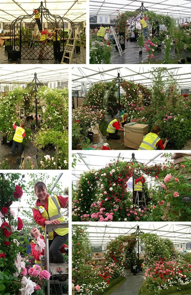 Chelsea Flower Show Build up 2015