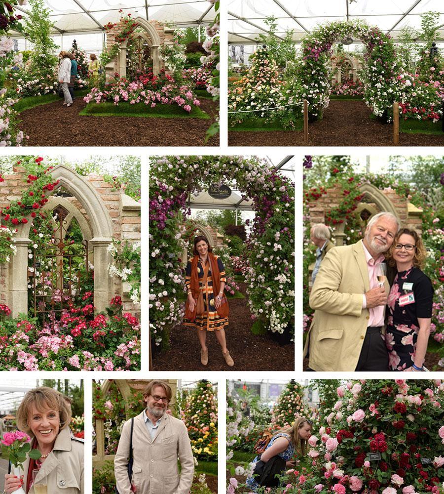 RHS Chelsea Flower Show 2016 Peter Beales Roses