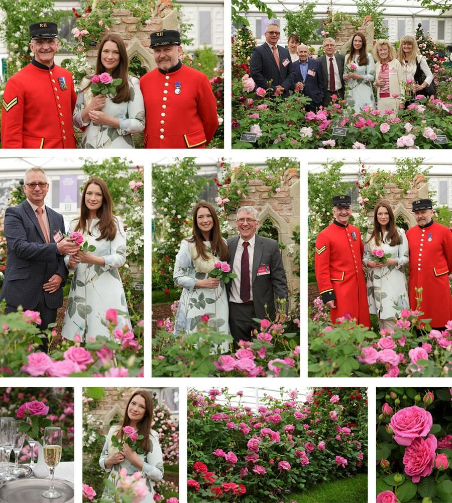 Sandringham Rose Launch