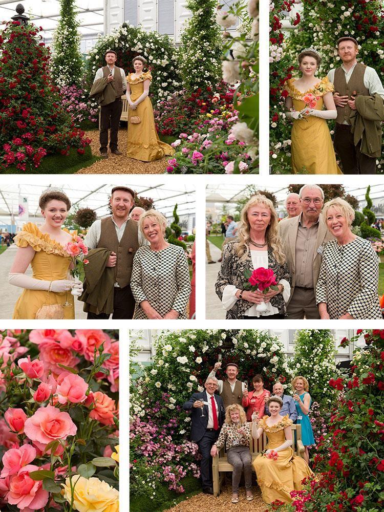 RHS Chelsea Flower Show New Roses 2017