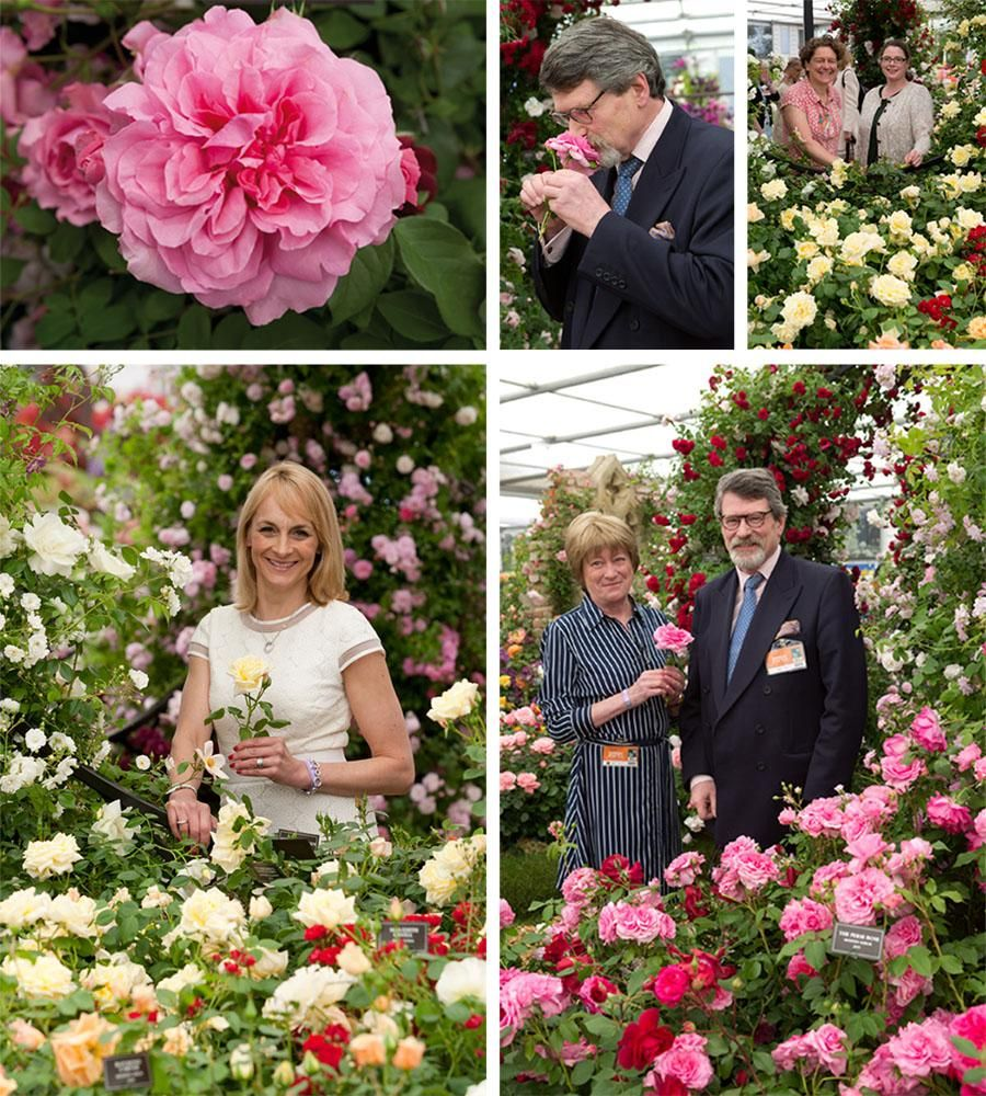 Launch of The Perse Rose and Stamford's Sanctuary