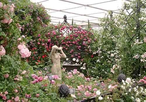 RHS Chelsea Flower Show 2007 Peter Beales Roses