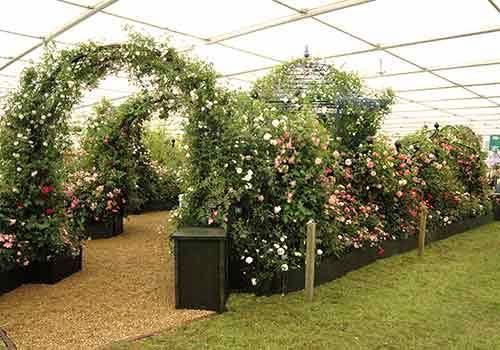 RHS Chelsea Flower Show 2006 Peter Beales Roses