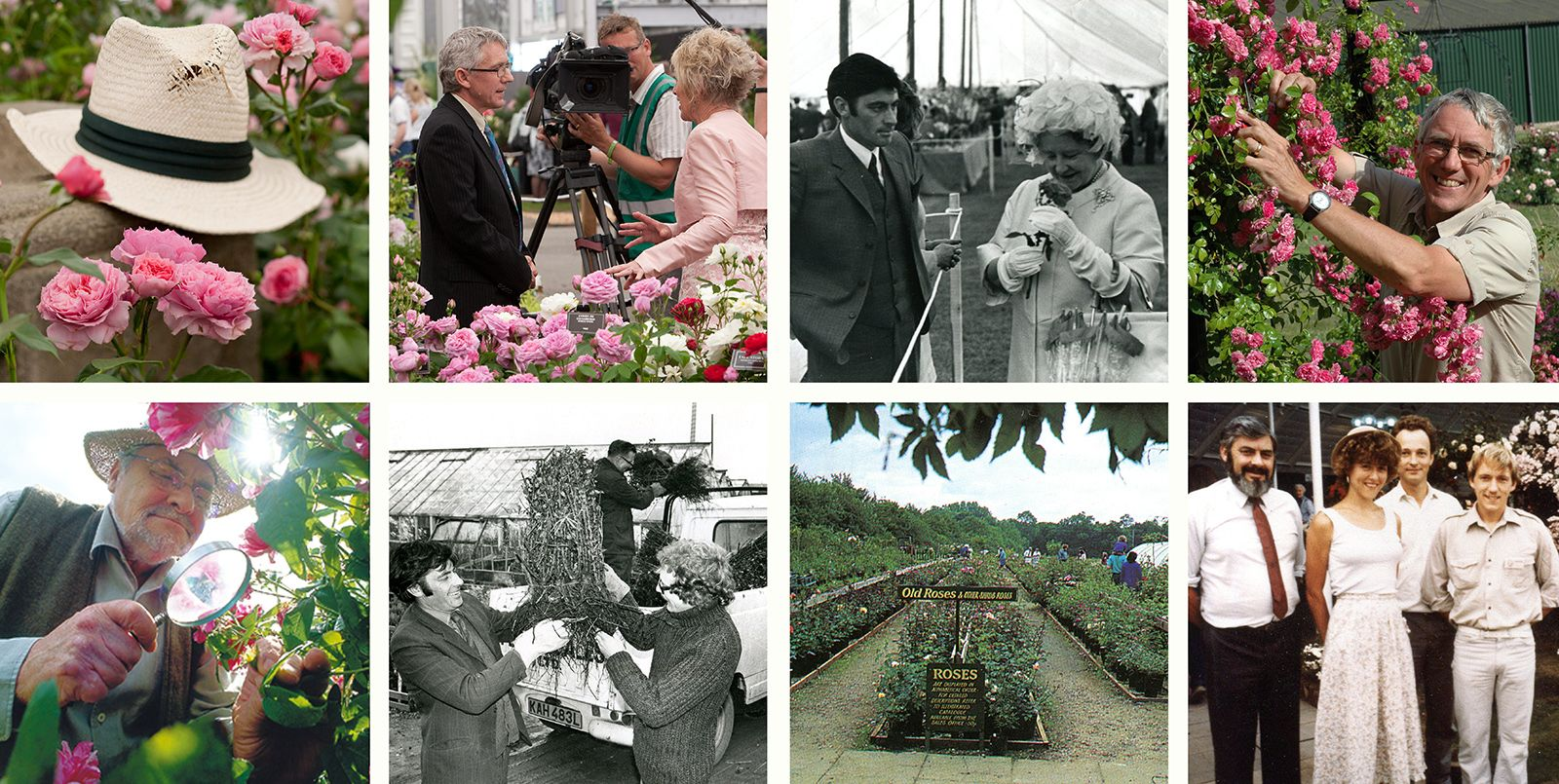 History of Peter Beales Roses