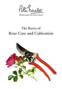 Rose Care and Cultivation Guide