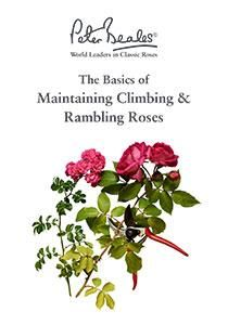 Maintaining Climbing and Rambling Roses Guide