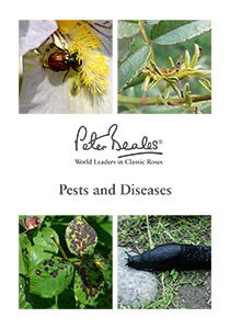 Pests & Diseases Guide