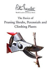 Pruning Shrubs, Perennials and Climbing Plants Guide