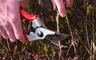 Pruning Shrubs, Perennials and Climbing Plants