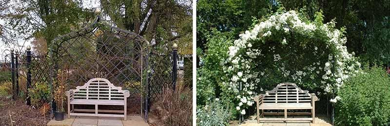 Pruning and Training Rambling Rector rose