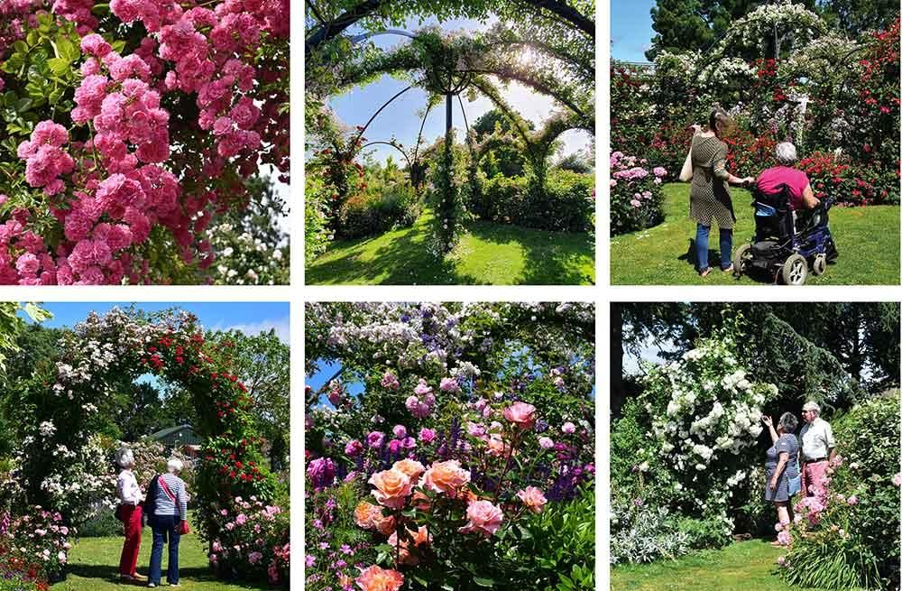 Peter Beales Rose Gardens