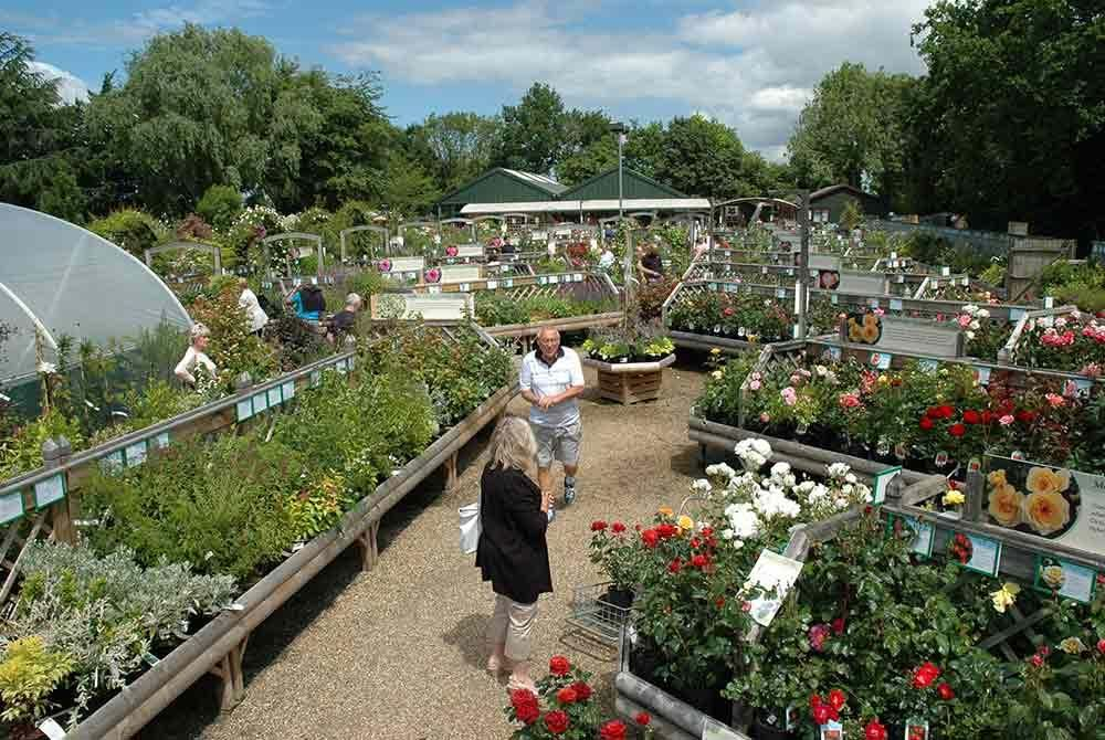 Peter Beales Specialist Rose and Plant Centre