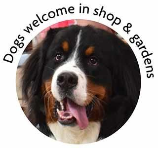 Peter Beales Garden Centre is dog friendly