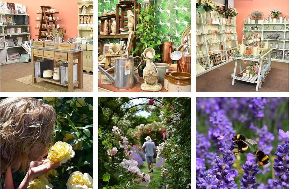 Peter Beales Garden Centre Gift Shop and Gardens