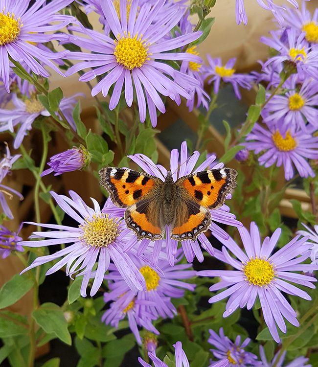 Autumnal Colour Planters Workshop