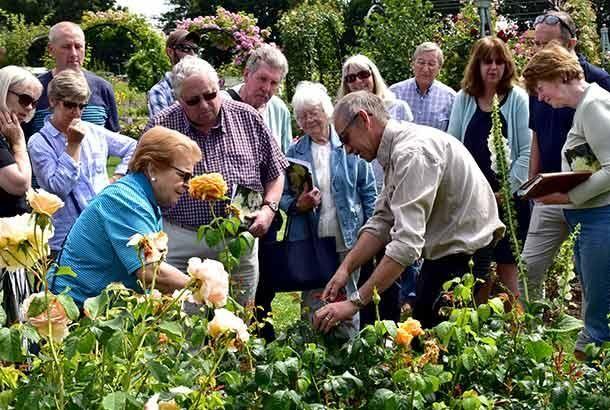Caring for roses workshop