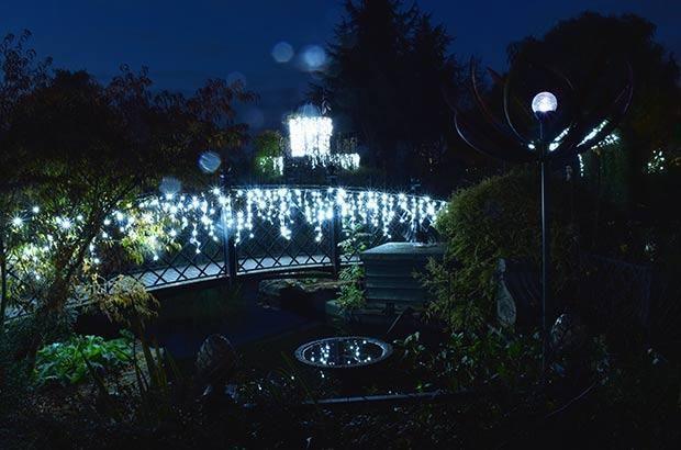 Christmas at Peter Beales Roses